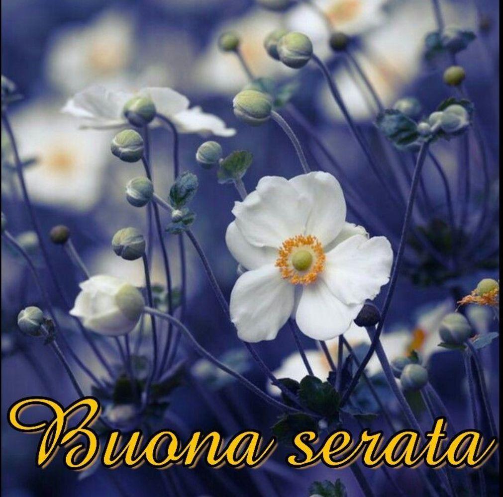 Buona-Serata-006